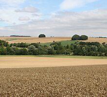 Wheat Field near Kennet Long Barrow, Wiltshire. by kissuquick