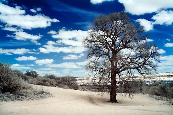 Infrared Tree by Sharonroseart