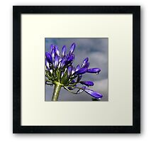 Just Water Droplets Framed Print