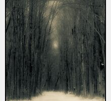 Forest In Winter by Mitch Labuda