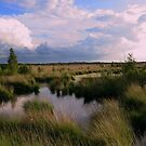 Summer in Fochtelooerveen by ienemien