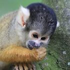 Squirrel monkey 2 by DutchLumix