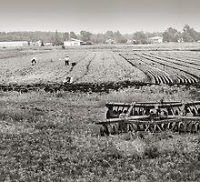 Crop Pickers by Steve Silverman