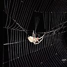 The Web of darkness by Jeff Ore