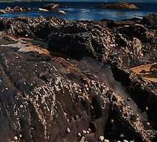 Tide Pool and Snails by Nikanon