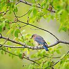 Still near the nest by Daniel  Parent