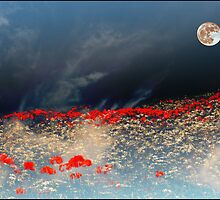Moonlit poppies by almaalice