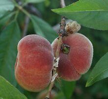 Flat Peaches by rominakatchidb