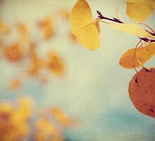 Aspen Leaves In The Wind by ameliakayphotog