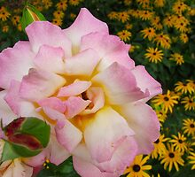 Ms. Snuggly Rose by MarianBendeth
