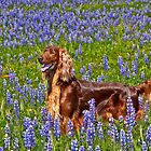Irish in the Lupine by Ann J. Sagel