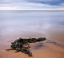 Seaweed, Crimdon, North East Coast. UK by David Lewins