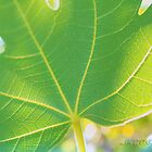 Fig leaf by aMOONy