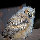WHOOOOO'S HE LOOKING AT? by Dennis  Small