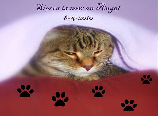 Sierra is now an Angel ©  by Dawn M. Becker