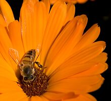 """Just """"Bee"""" Yourself...  (Free State, South Africa) by Qnita"""