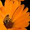 Just &quot;Bee&quot; Yourself...  (Free State, South Africa) by Qnita