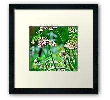 Hummingbird Happiness...is Nectar Framed Print