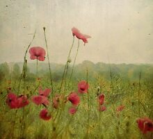 Poppies in the rain by Citizen