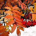 Snow on Scarlet Magick by RC deWinter