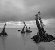 Deeply rooted by joel Durbridge