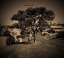 Tree Taringa by technokitty
