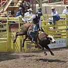 Bull Riding 2 Pikes Peak or Bust Rodeo by hedgie6