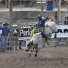 Bull Riding 3 Pikes Peak or Bust Rodeo by hedgie6