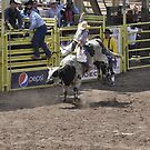Bull Riding 5 Pikes Peak or Bust Rodeo by hedgie6