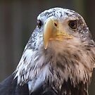 The Birds of the Carolina Raptor Center by Lolabud
