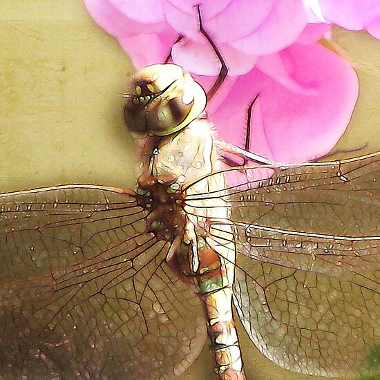 ~ Dragon Fly 2 ~ by Brenda Boisvert