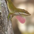 Chameleon Showing Off by Penny Odom