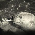 ~Polar Treat~ by a~m .