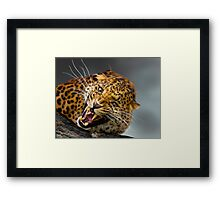 I don't think that you should come any closer!! Framed Print