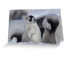 Half Asleep Emperor Penguin Chick - Snow Hill Island  Greeting Card