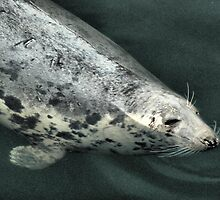 The Grey Seal  by Lilian Marshall
