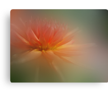 Dream Dahlia Canvas Print
