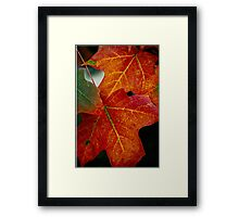 Fall leaves......My favorite time of year.. Framed Print