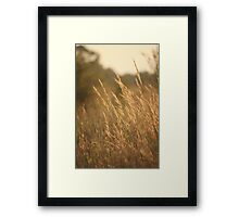 July Evening Breeze Framed Print