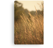 July Evening Breeze Canvas Print