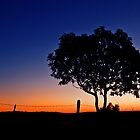 One Tree Hill - Marburg Qld Australia by Beth  Wode