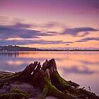 Dead Tree Stumps evening glow. by Dejezza