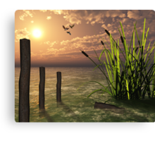 Bull rushes Canvas Print