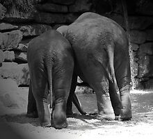 Elephant behinds by avdw