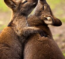 Hugs by DawsonImages