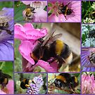 Bee-eautiful Bee Collage...... by Sandra Cockayne