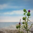 Thistle by Alan Hyland