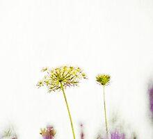 Lavender & Lace by UrbanUtopia