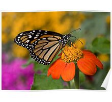 Monarch in the Garden Poster