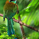 Blue-crowned Motmot (Momotus momota) - Costa Rica by Jason Weigner